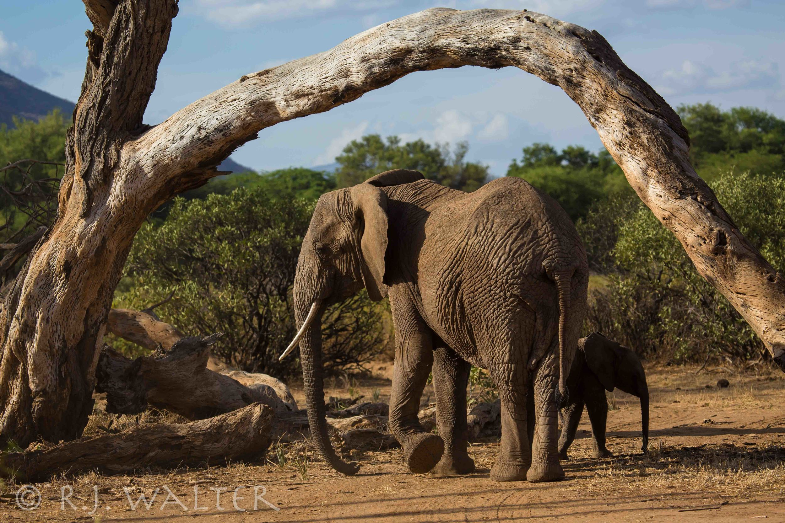 RJWalter_Save The Elephants_Samburu, Kenya_March 2015-7982.jpg