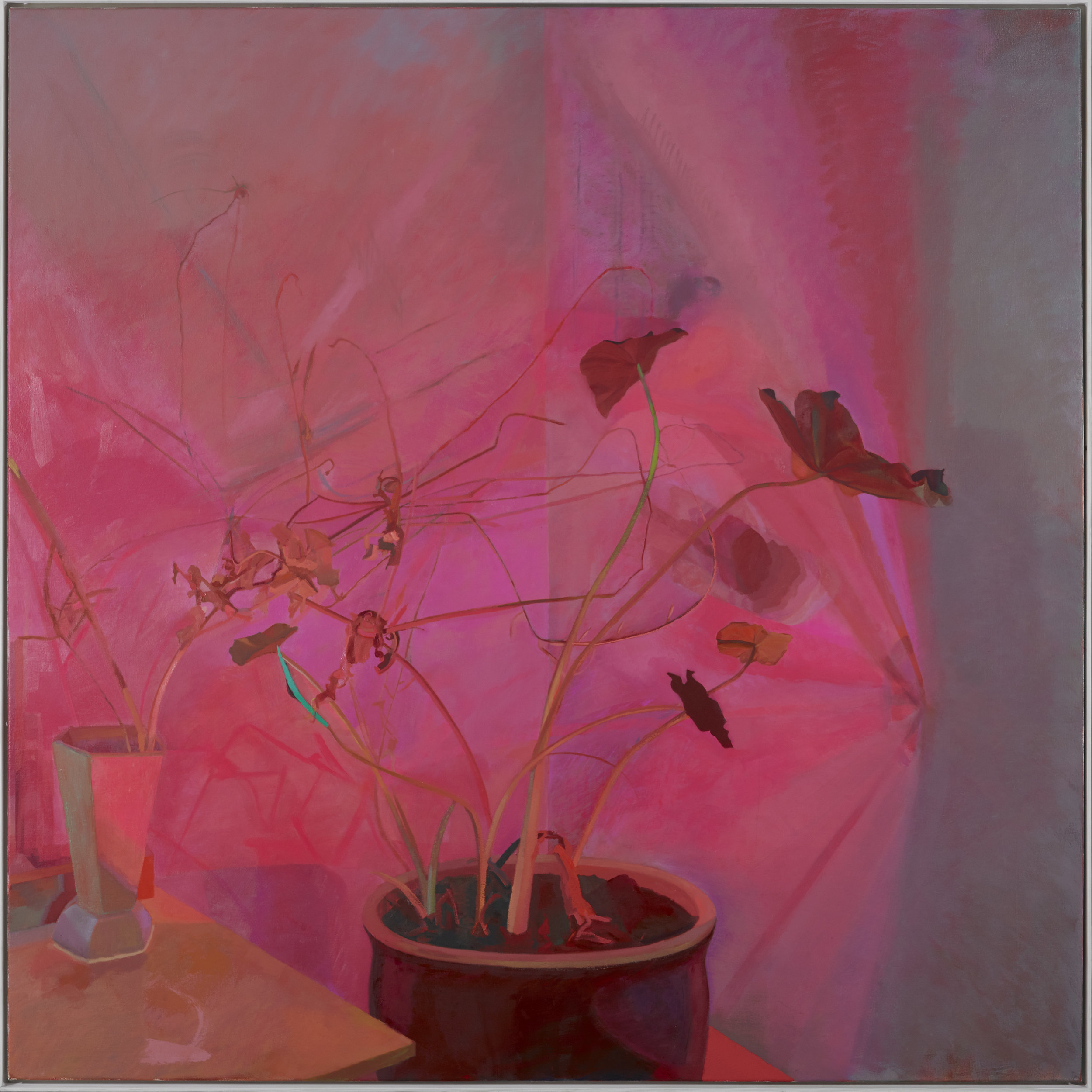 Red Light, Elephant Ear and Bolted Cabbage   2019  oil on canvas  60x60 inches