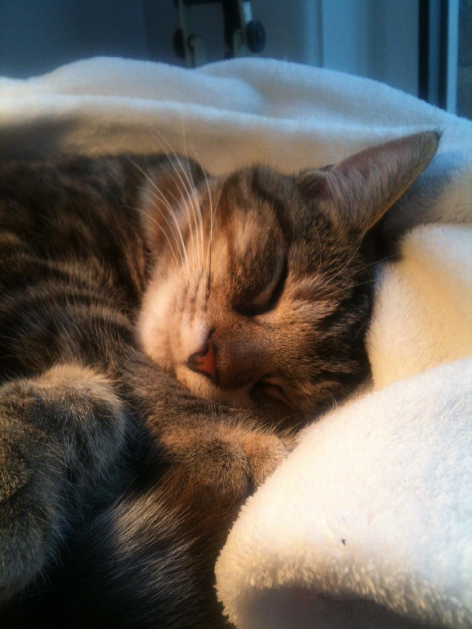 Alba Sleeping