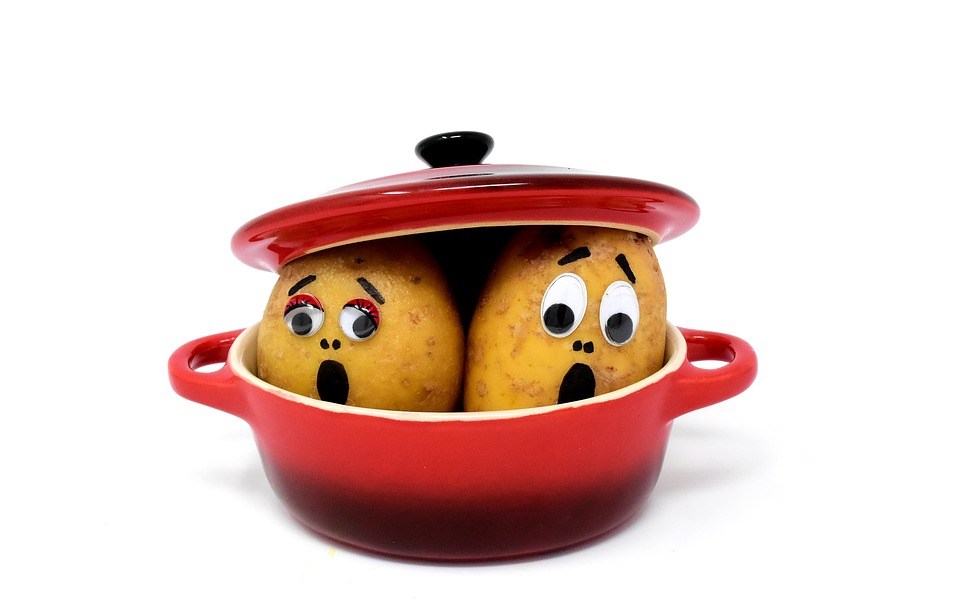 [image: photo of two potatoes in a red pot. The potatoes have faces, both with big eyes, raised eyebrows, and open mouths--apparently expressing panic, shock, and/or fear.]