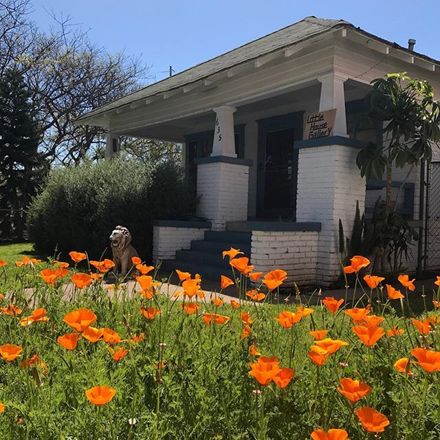 spring poppies in full effect! #tiethatbinds #gardeninstall #poppies #littlehousegallery