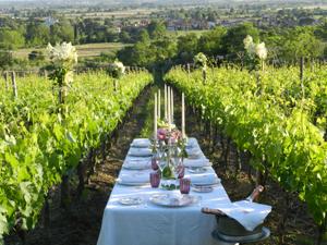 vineyard 22.26.15.jpg