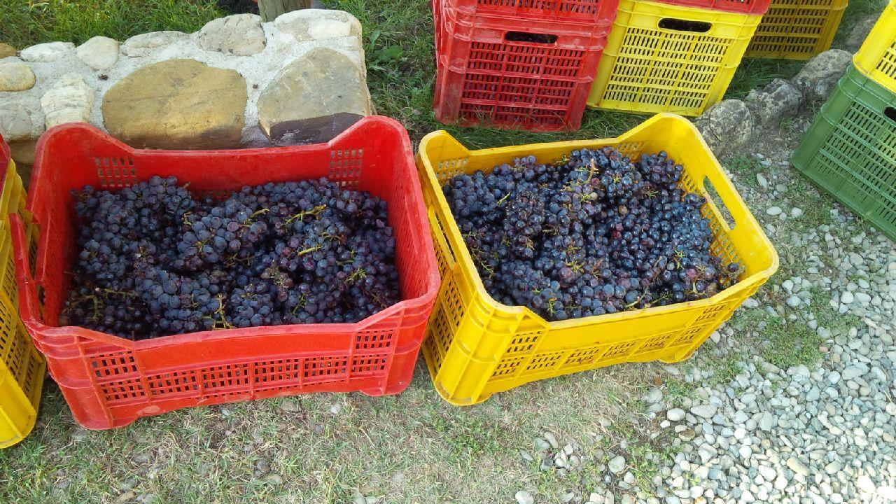 Grapes-Il-Bacio.jpg