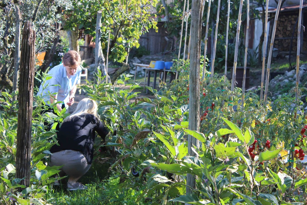 Piking-in-Farmhouse-gardengarden.jpg