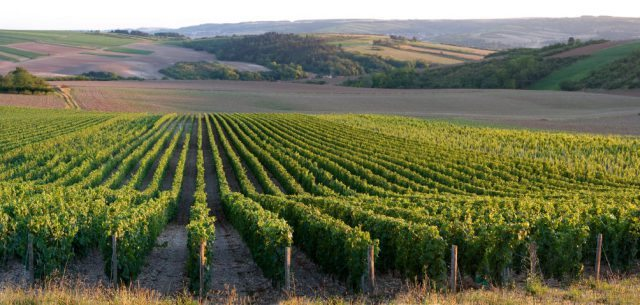 Inclusions: - 3 Nights B&B accommodationBike guide & support van2 lunches and 1 dinner2 vineyard visits & wine tastingsBike RentalLuggage transfers