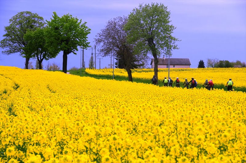 Burgundy Gastronomic Cycle - World class wines, stunning countryside and gastronomic pleasure...join this long-weekend cycling experience in Burgundy!