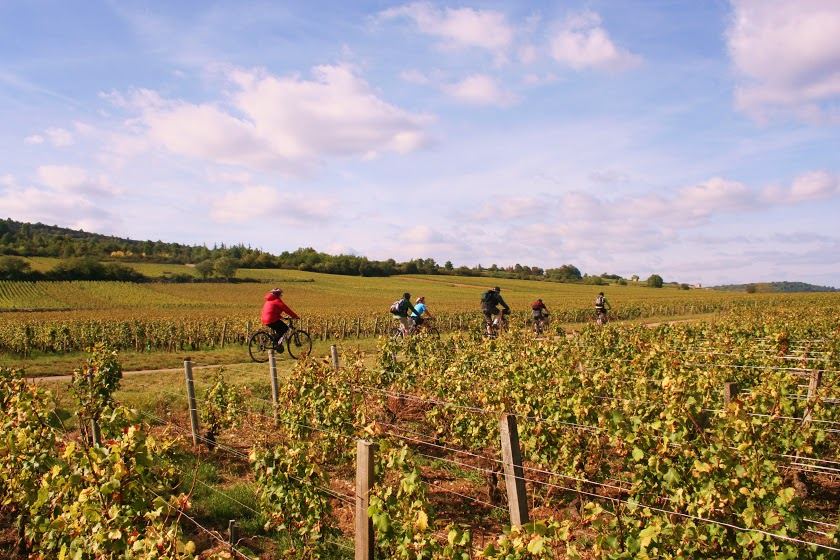 Burgundy Gastronomic Cycle