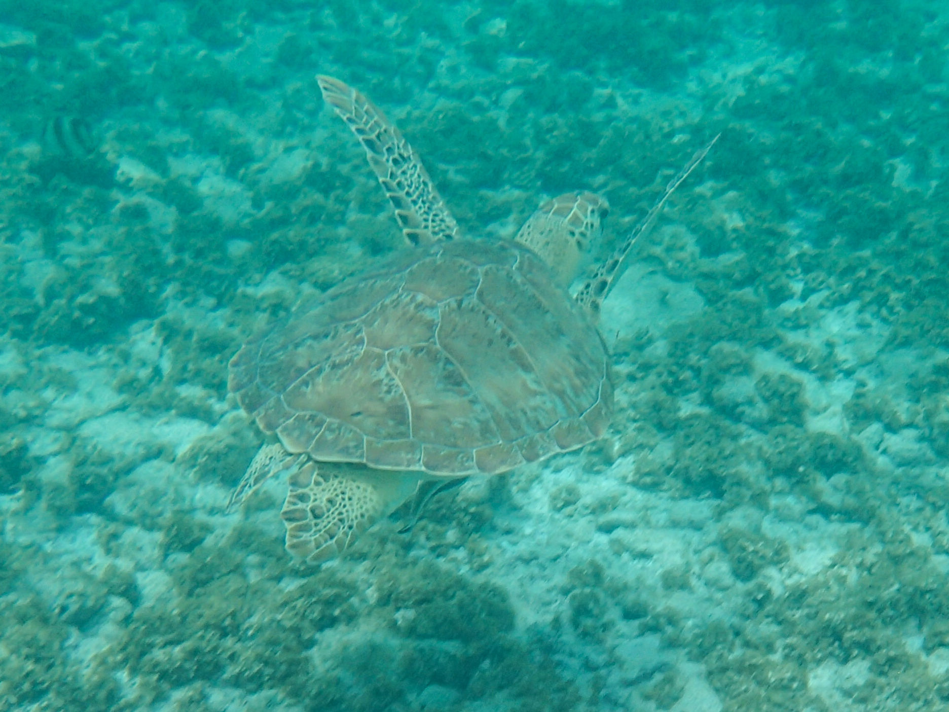 Sea turtles at sports