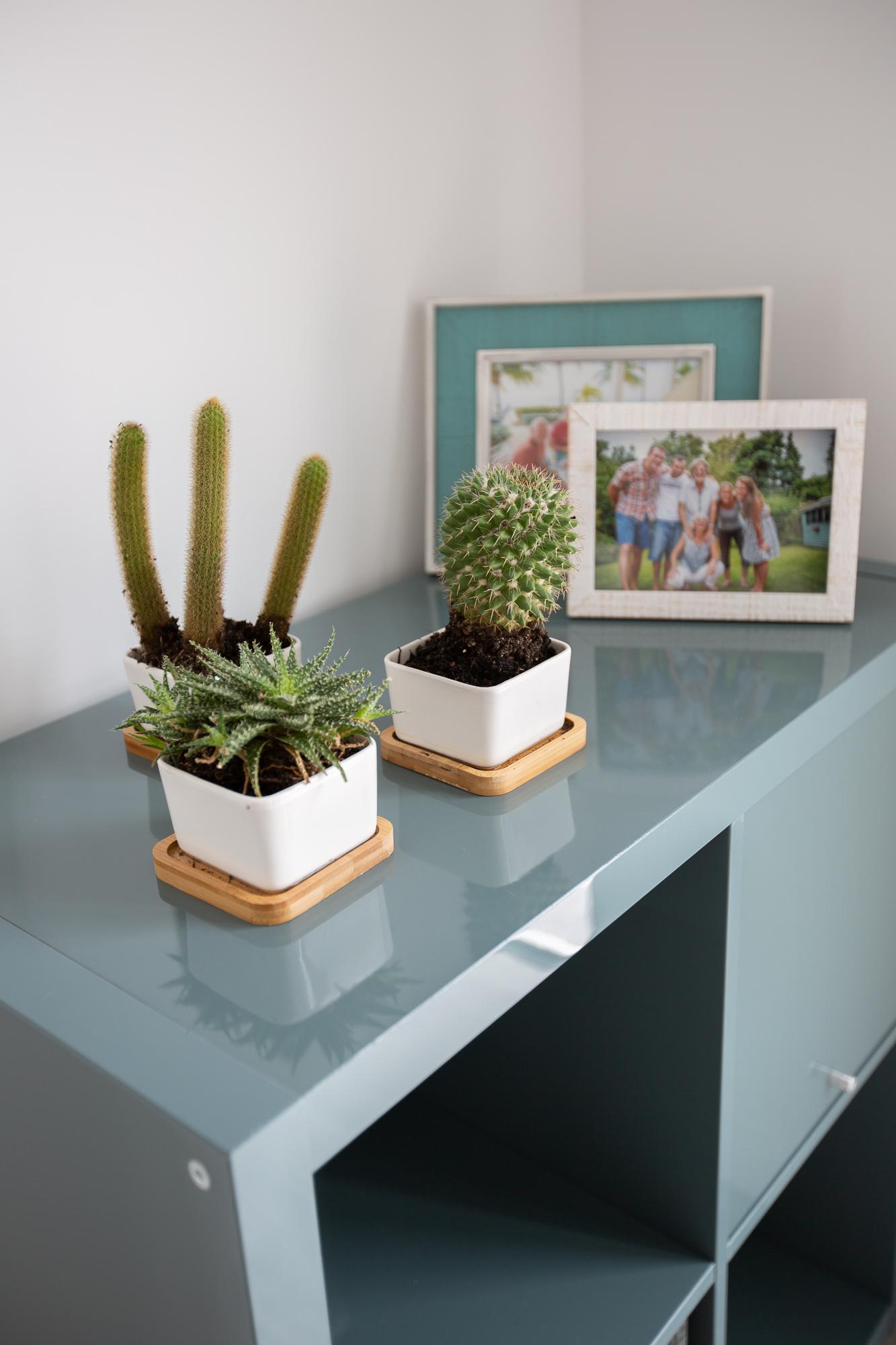 Planters    //    Storage Unit    //    Photo Frames    //    Succulents
