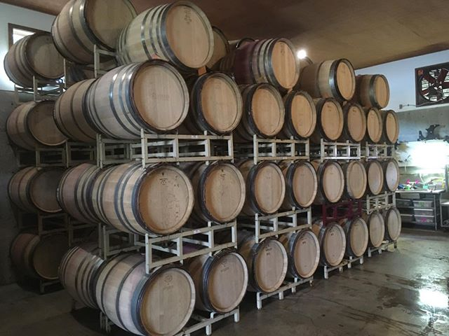 92 barrels of 2019 Estate Pinot Noir safely tucked away!