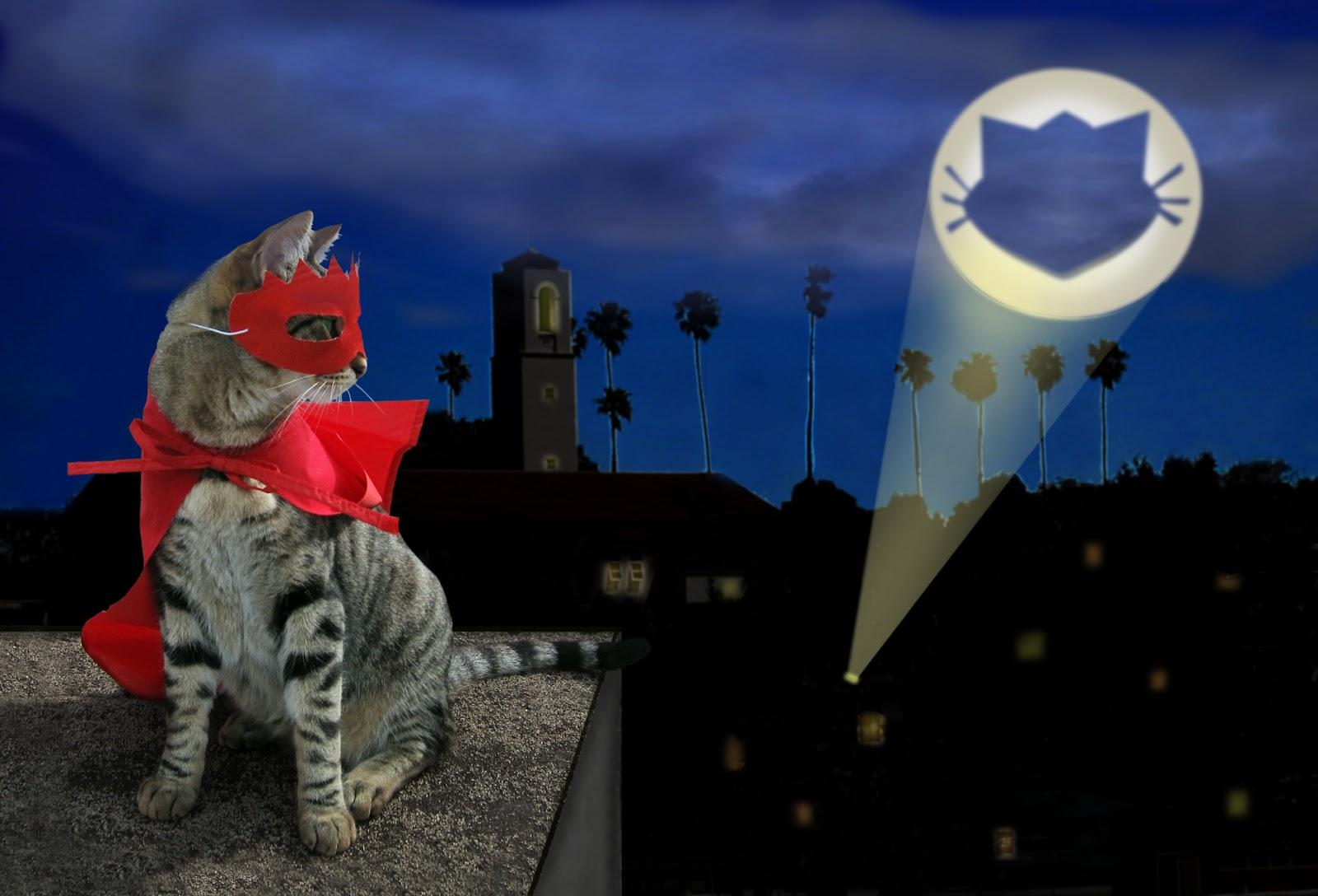 cat-signal1.jpg