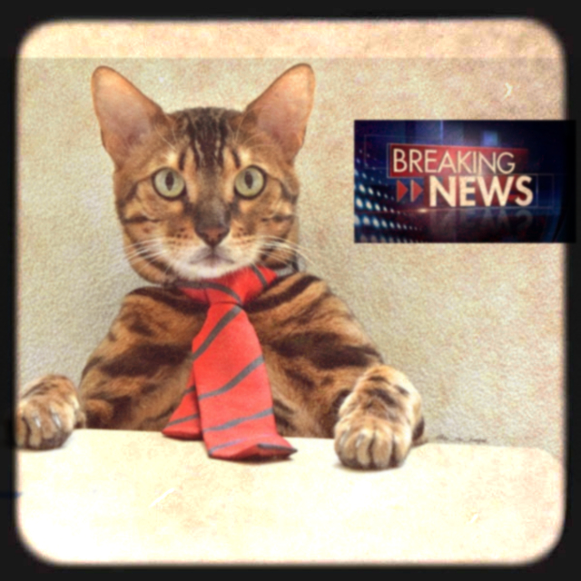The Docket - Click the news-cat!