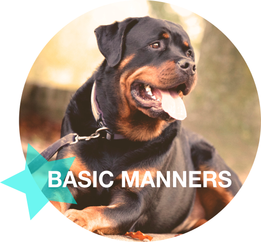 Basic Manners.png