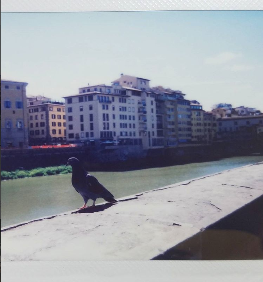 Pigeon in Florence