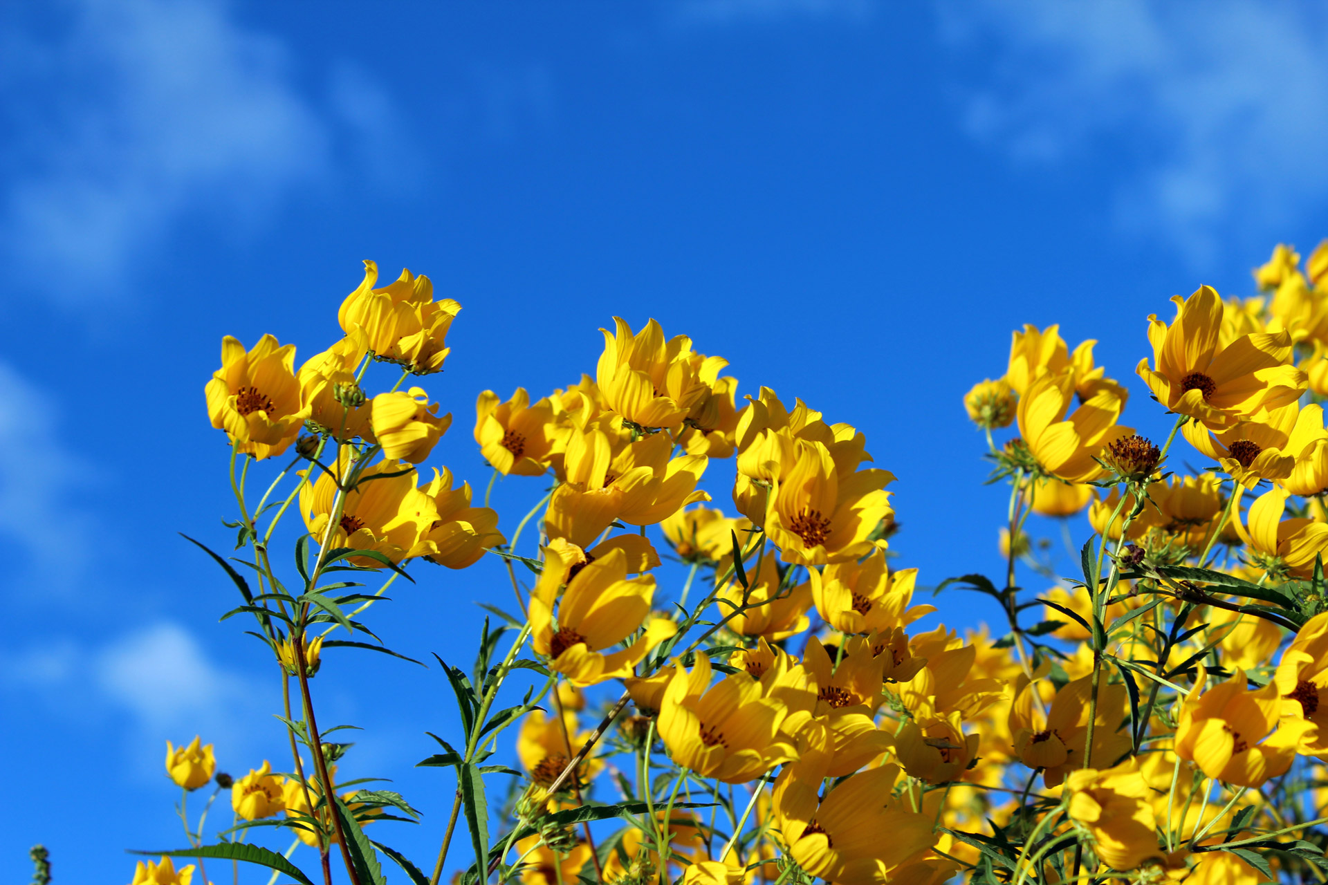 sky and yellow wild flowers.jpg