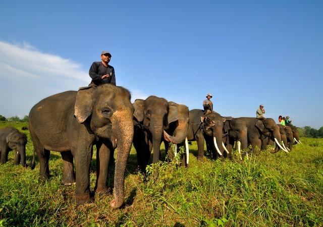 Waykambas National Park, source : google