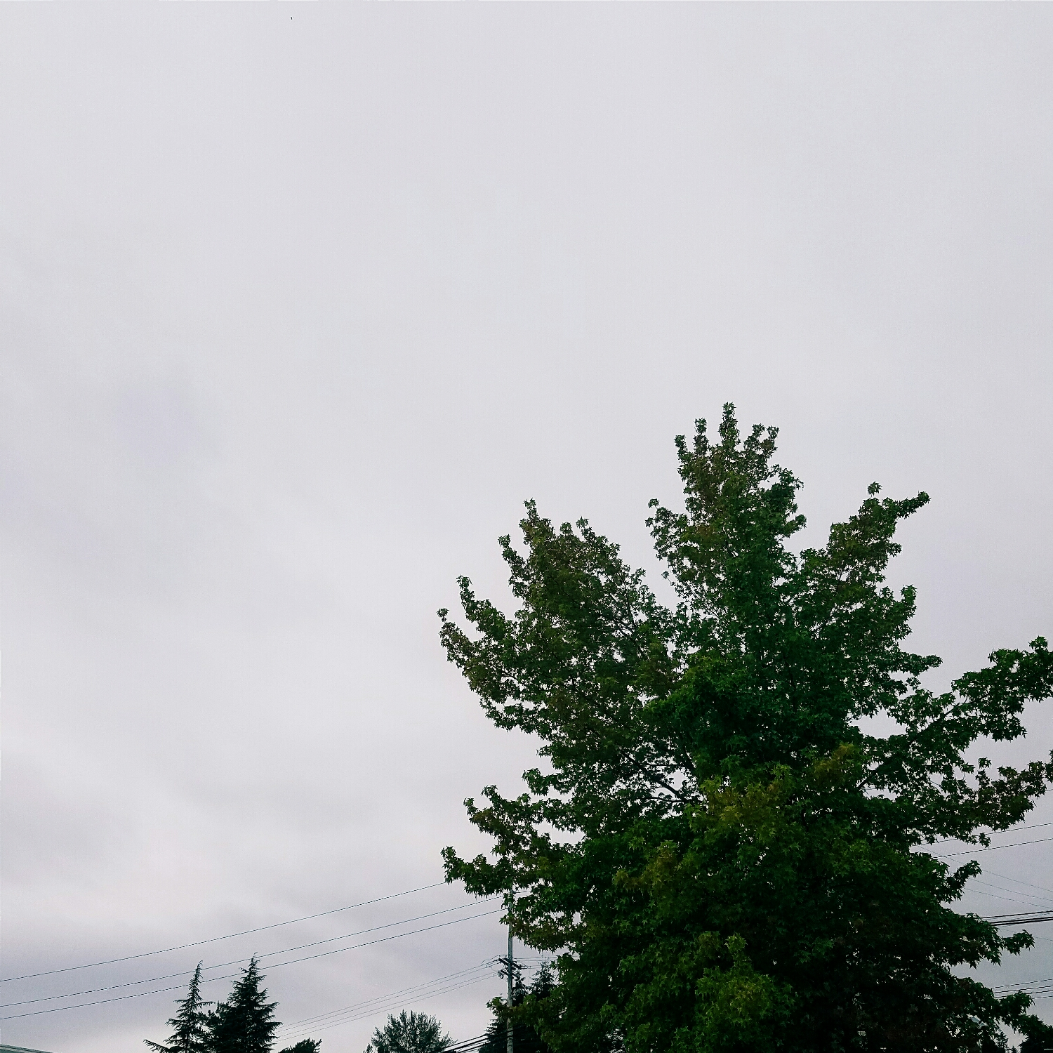 July in Seattle: chilly and overcast when I go to lunch...