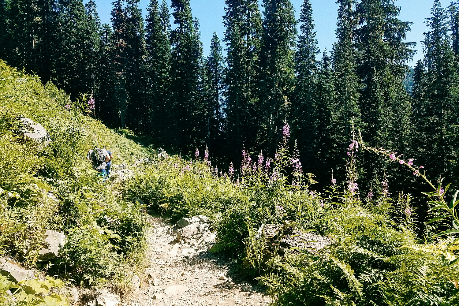This stretch of trail will forever remind me of the new friends I made on the blogger hike that Alpine Lily planned last summer!