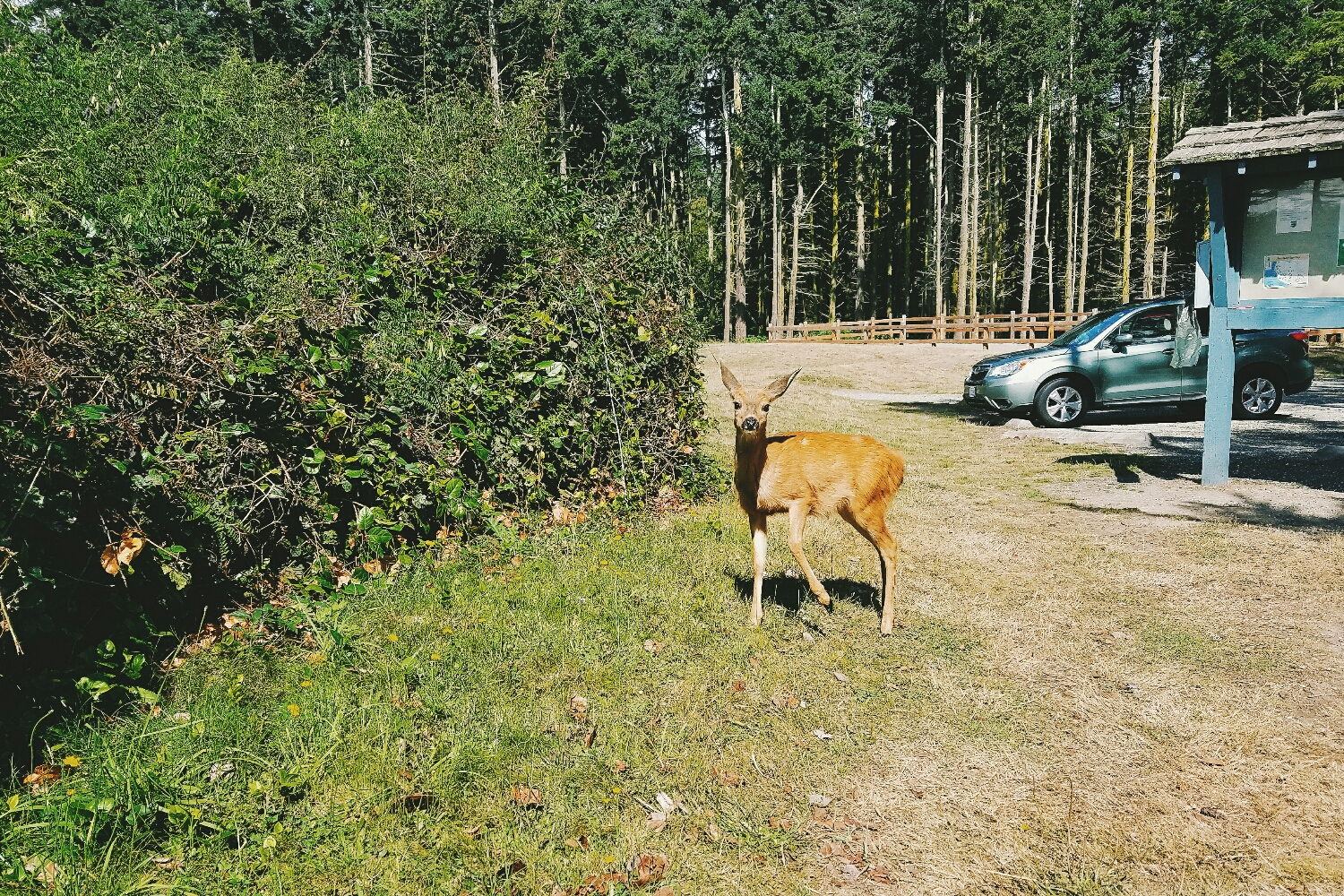 We saw so many young deer over the week.This one almost seemed like he wanted to be my friend!