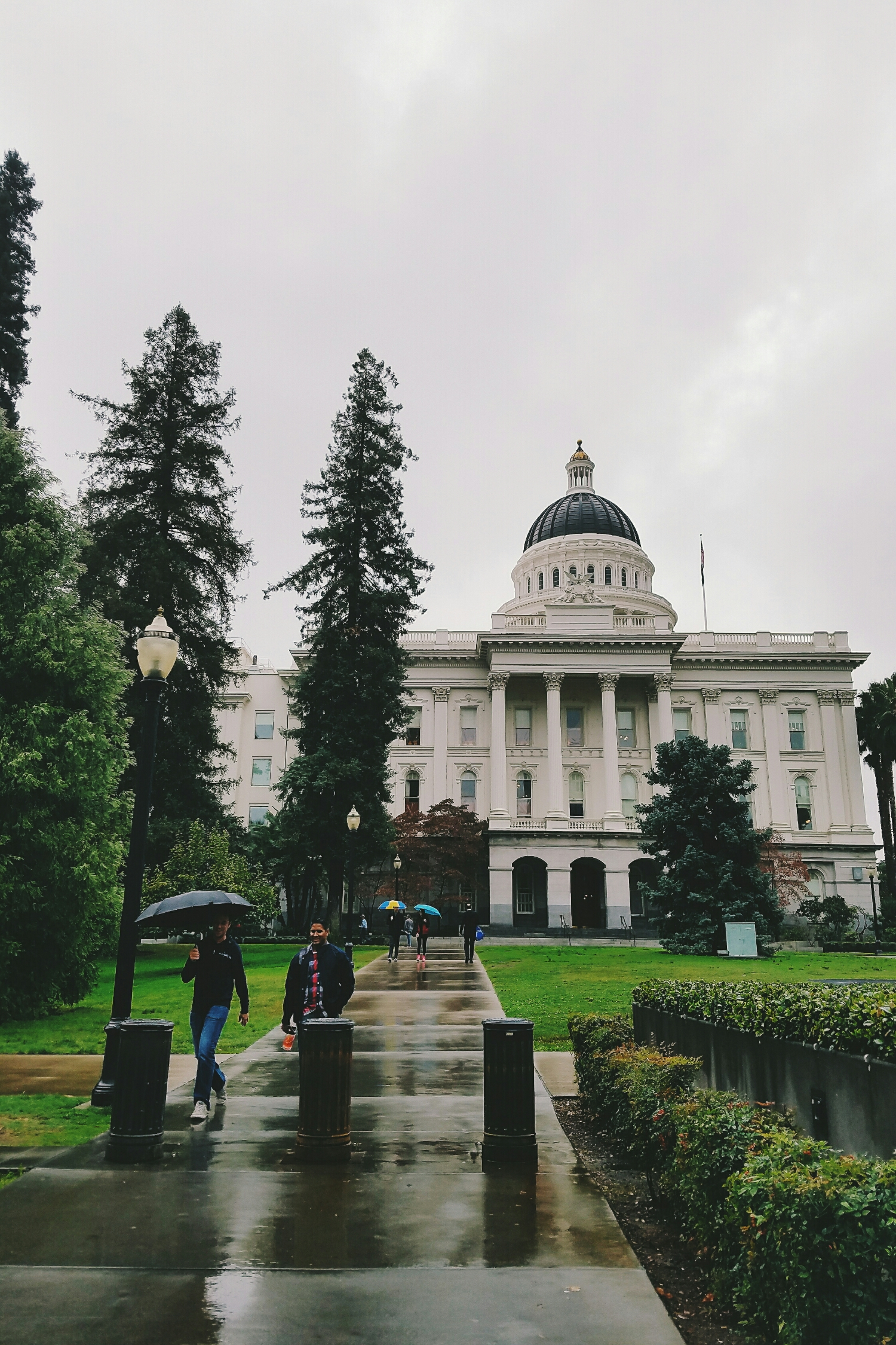 Fall views in Sacramento - lots of green and lots of umbrellas!
