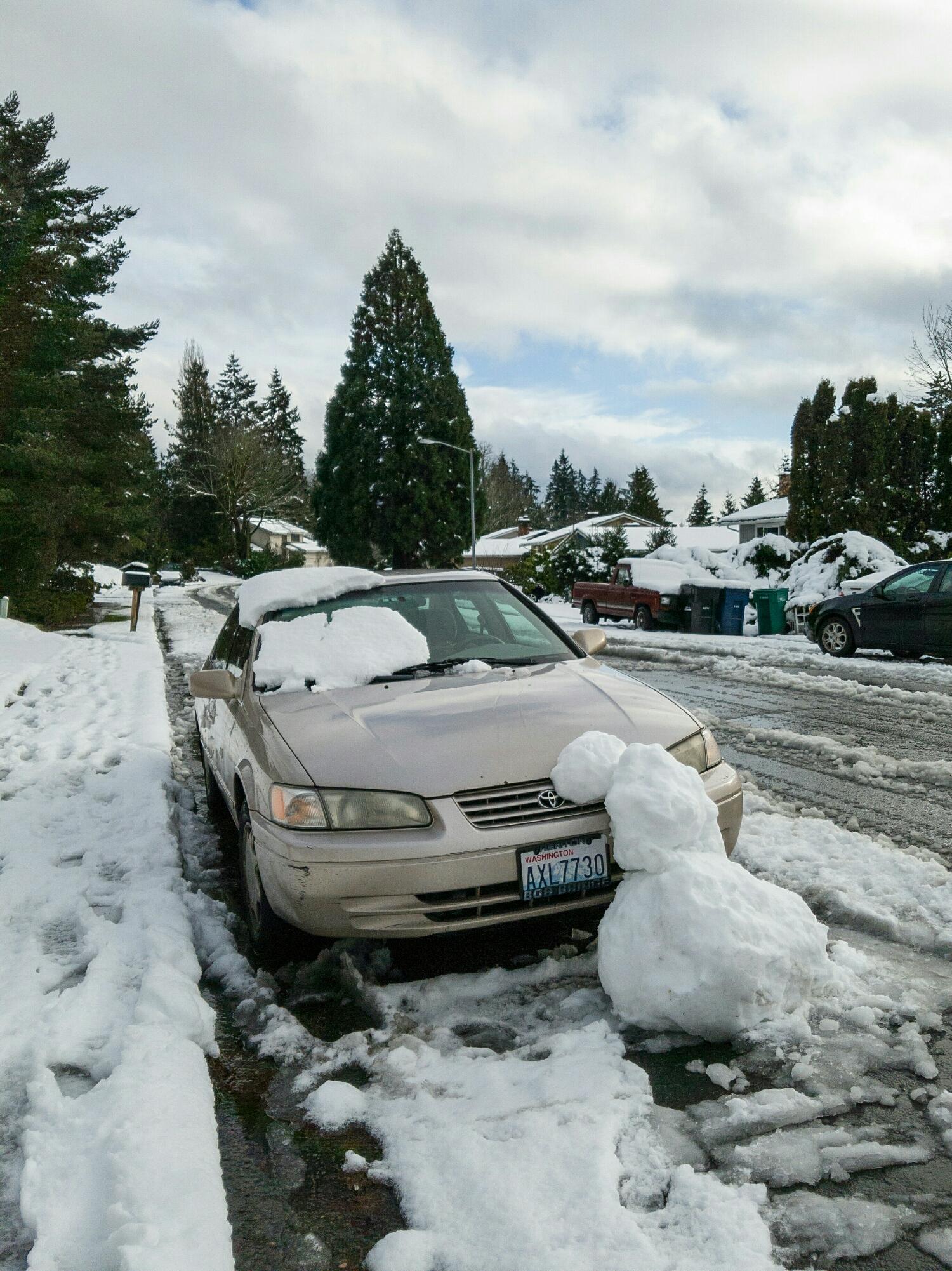 Snowy casualty