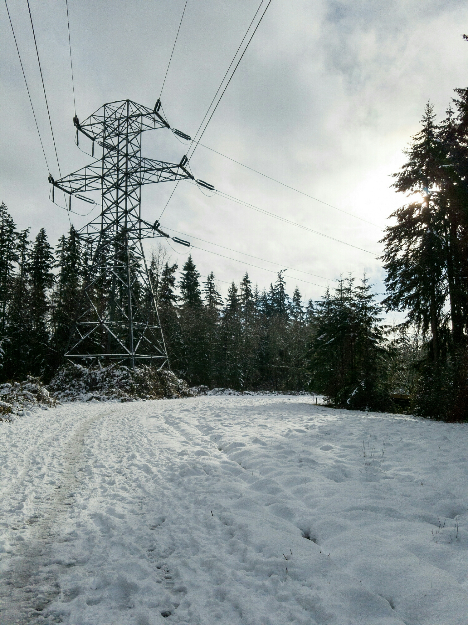 Not my usual view on the Powerline Trail!