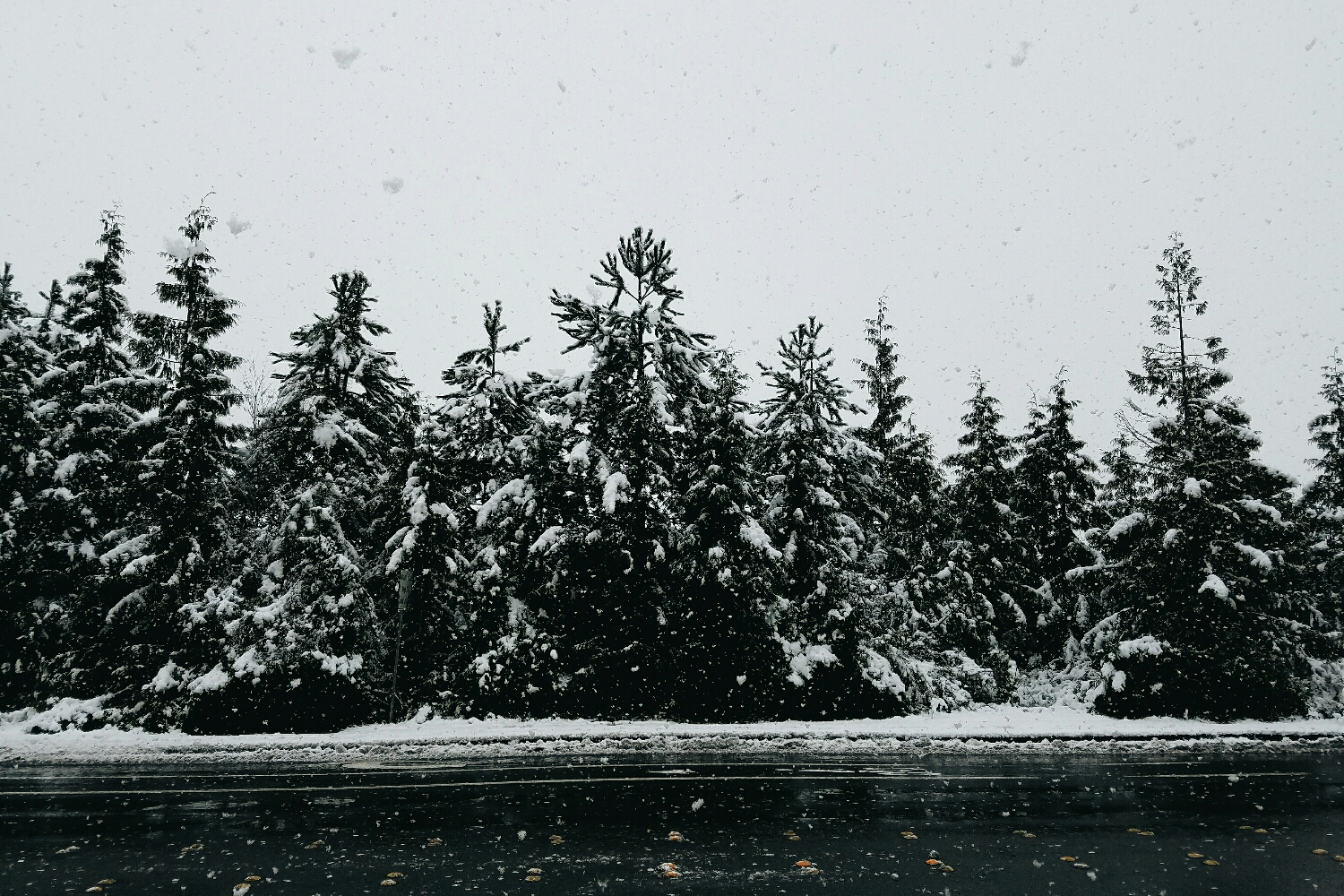 Giant, soggy snowflakes made for a very wet walk to the grocery store!