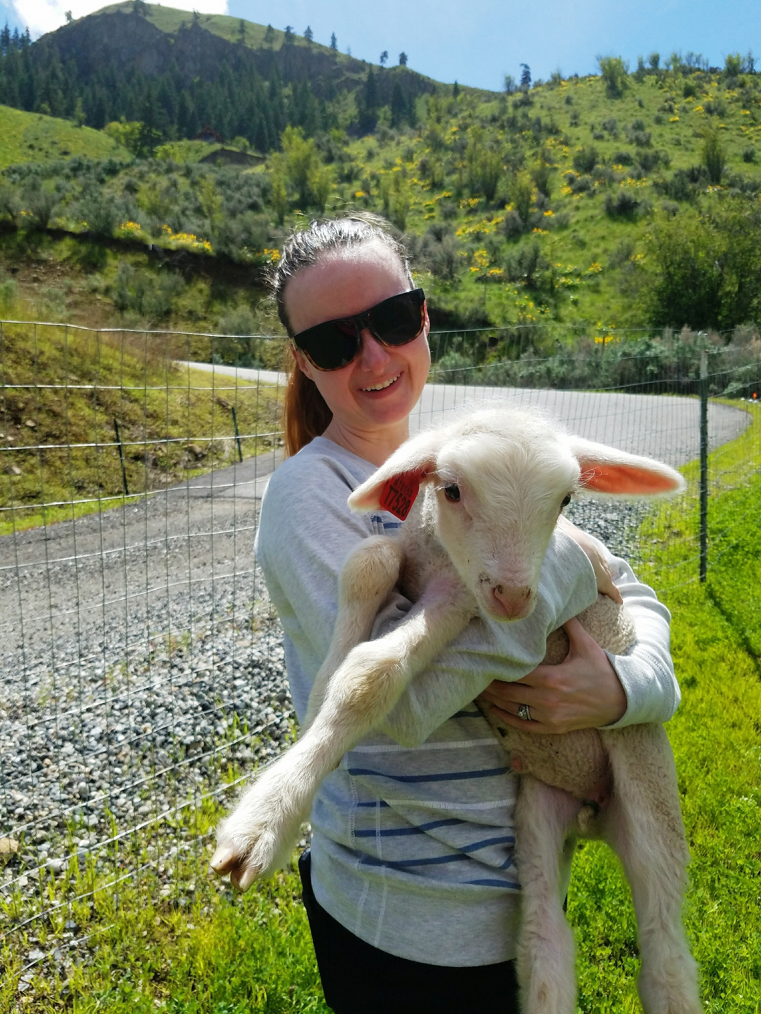 I think I may have been more excited about the lambs than my niece. So fleecy!
