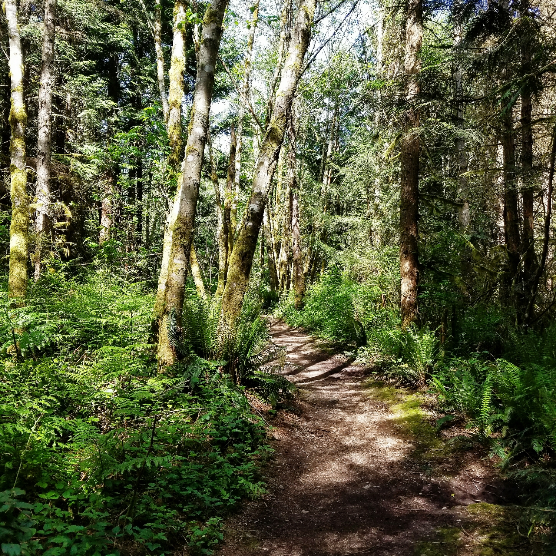 Sun-dappled woods are my favorite!