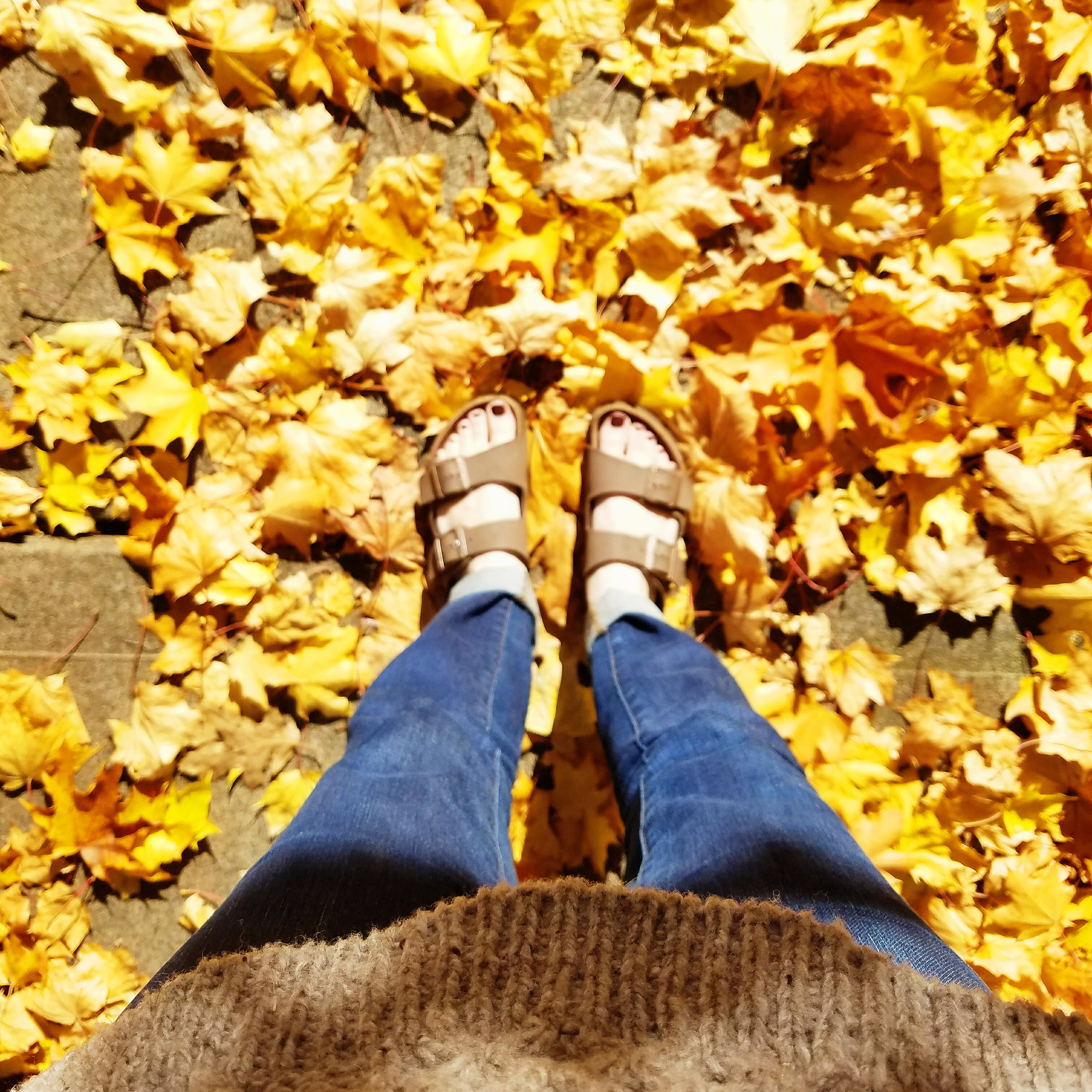 I would go out of my way to walk through these leaves!