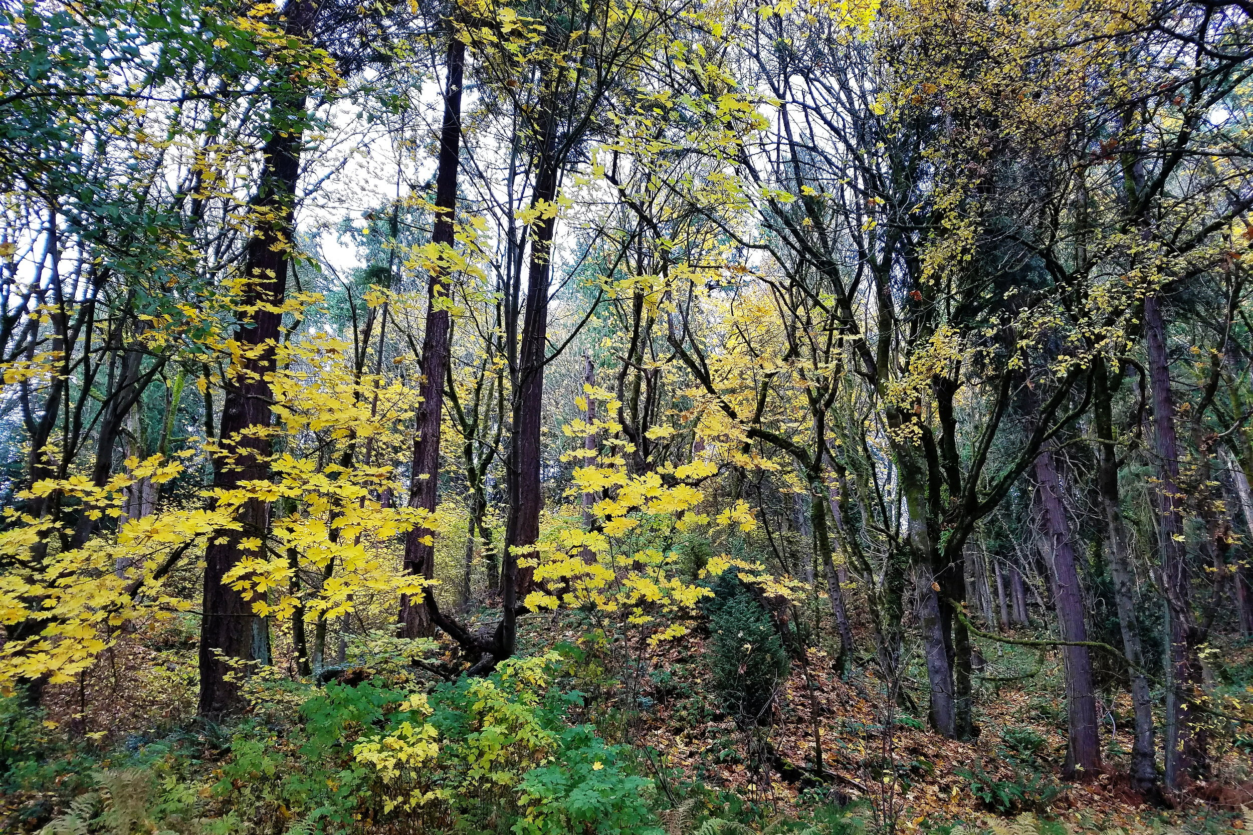 The last of the gorgeous fall foliage lingering on the trees