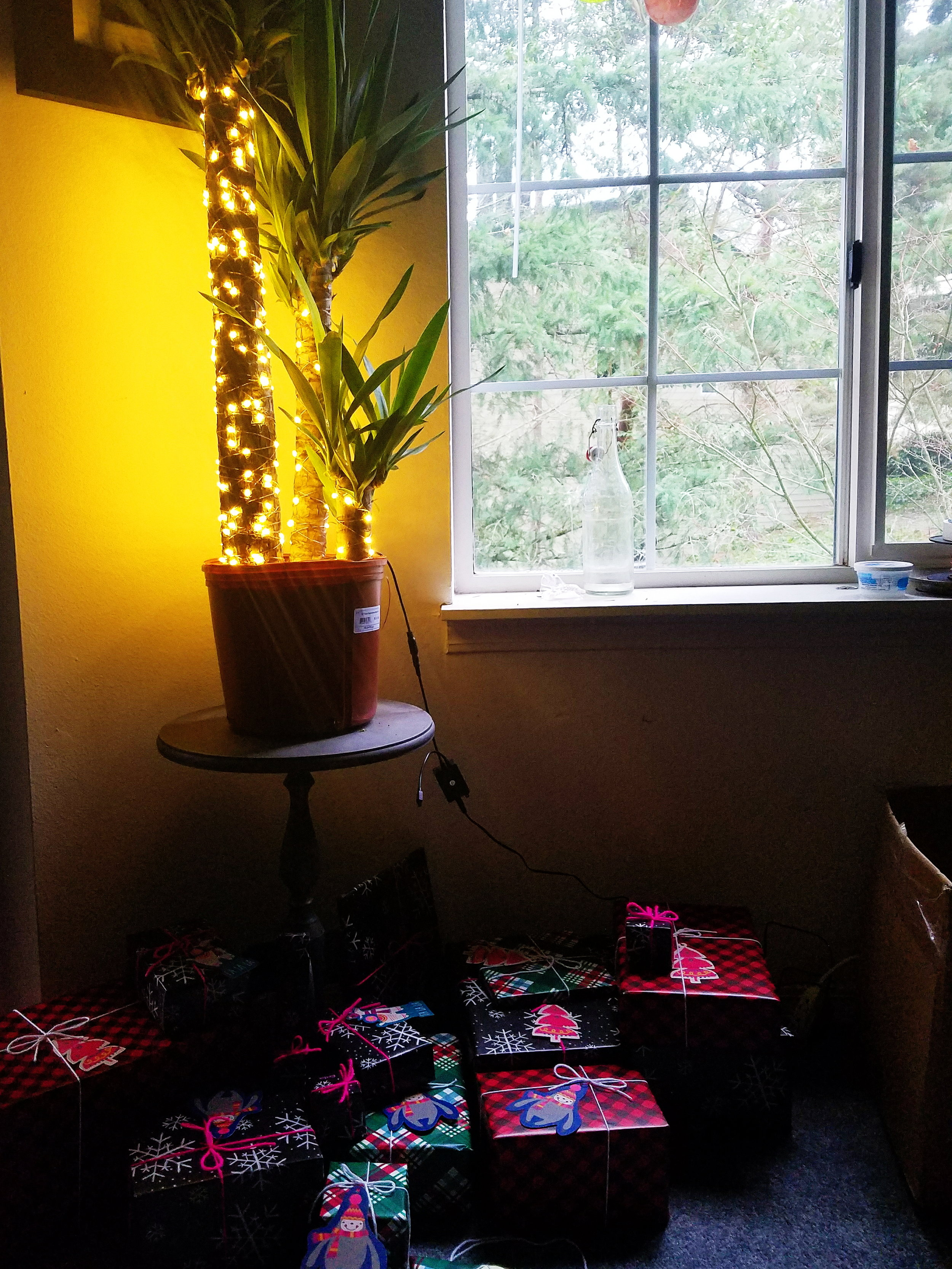 We didn't have time to cut a Christmas tree this year, so instead we decorated a potted plant!