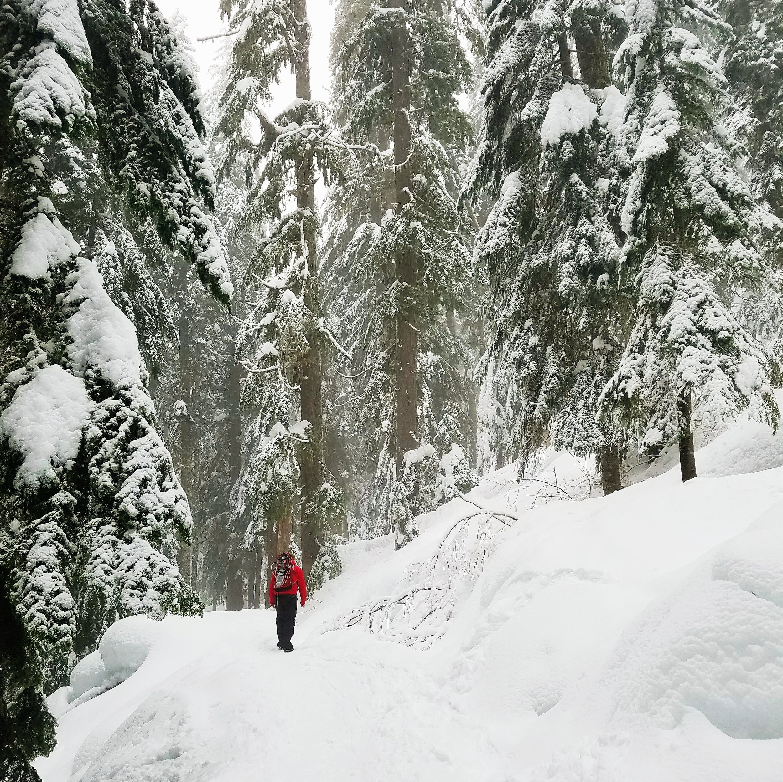 Snowshoe on Sunday. It was so pretty a misty, but impossible to take photos of!