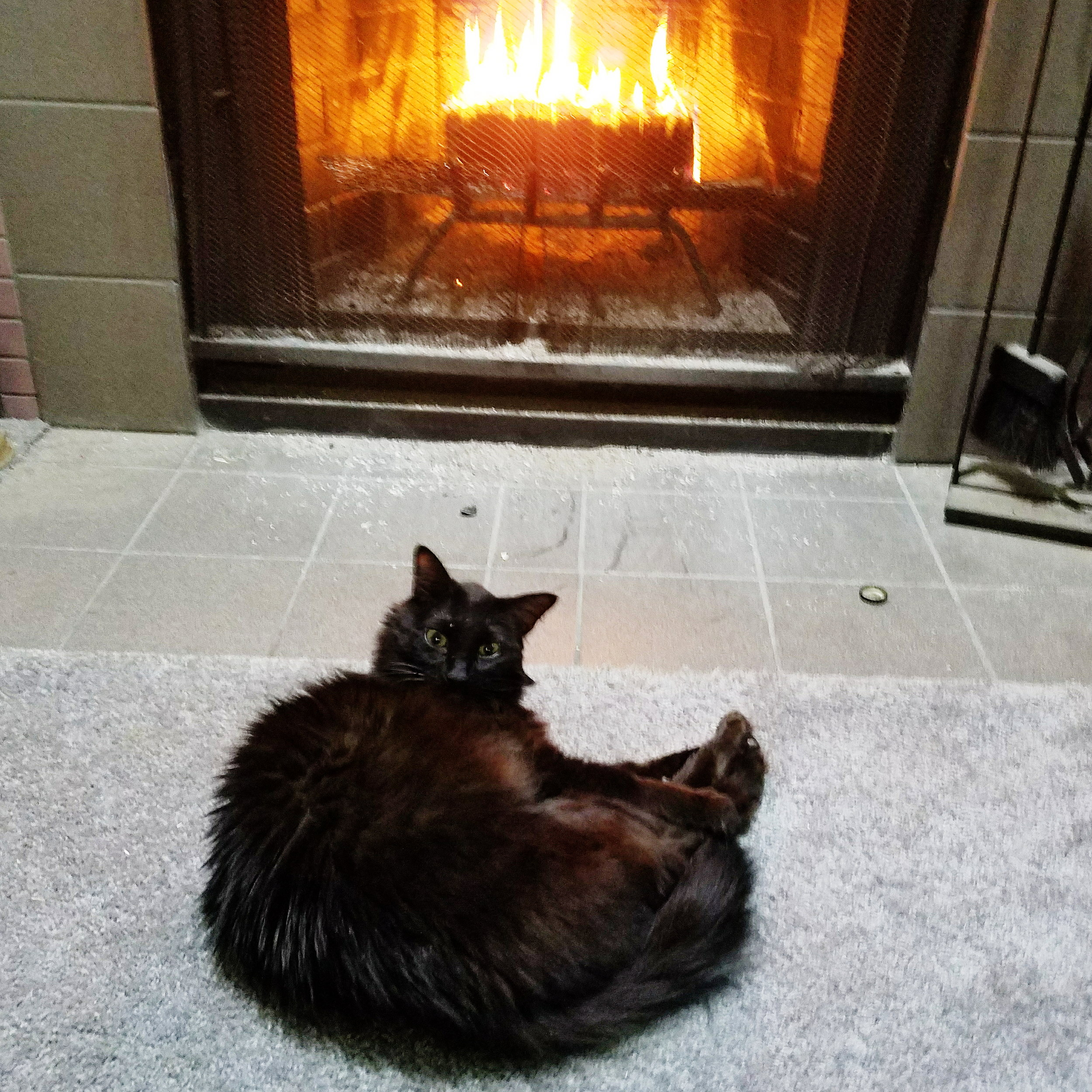 Getting dirty looks for oh-so-rudely interrupting his nap in front of the fire