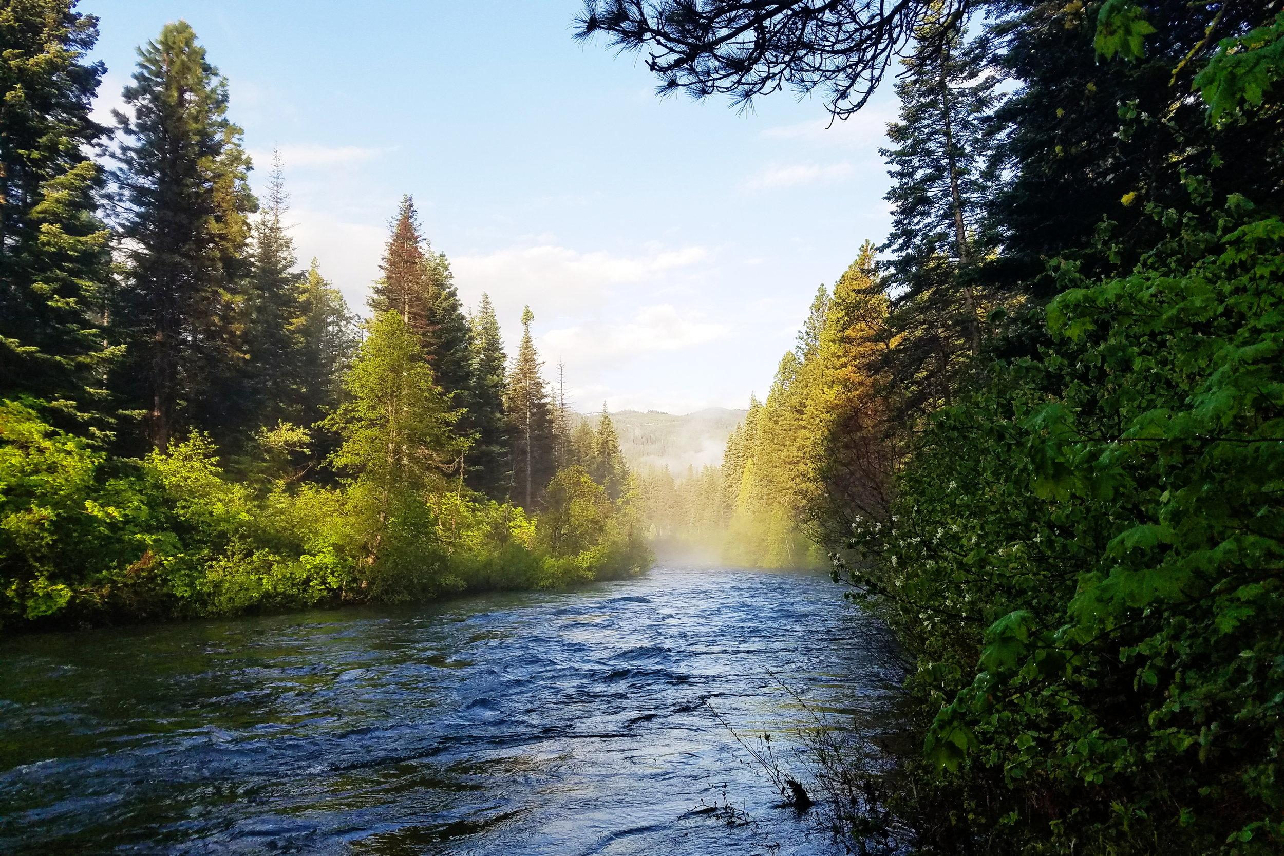 Misty morning view of Nason Creek
