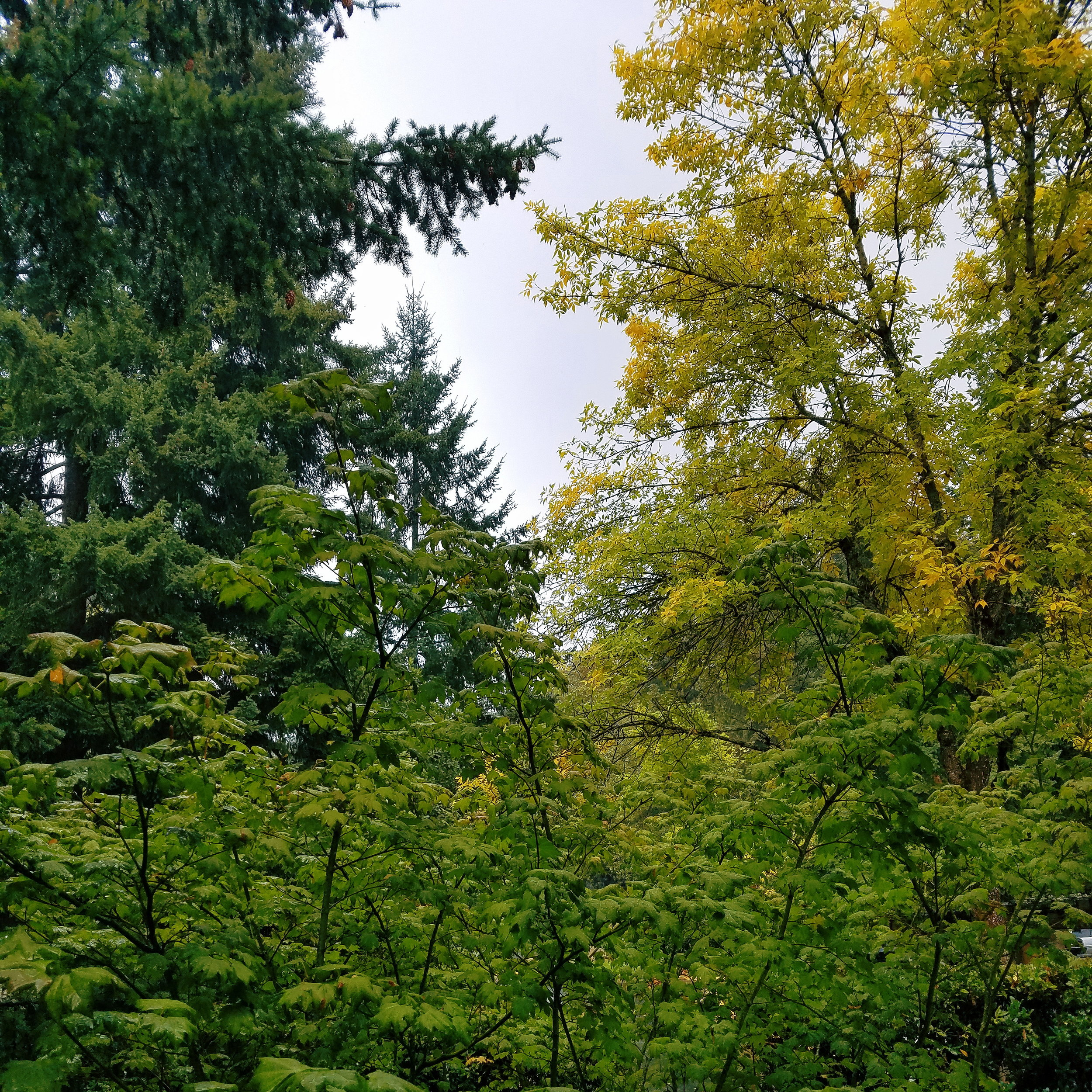 Grey skies and just a hint of fall color - my favorite season is here!