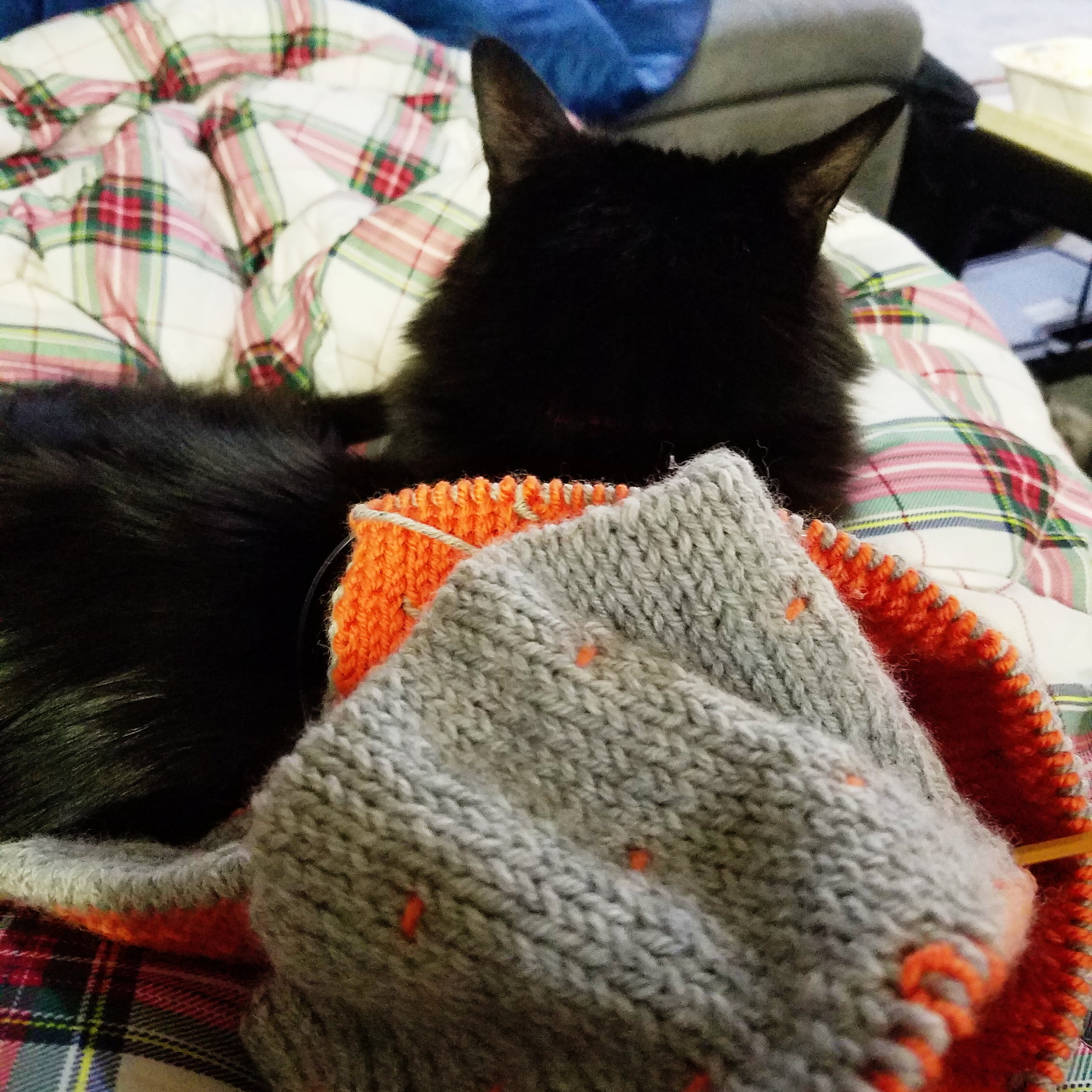 My average weeknight view these days - knitting and a cat on my lap!