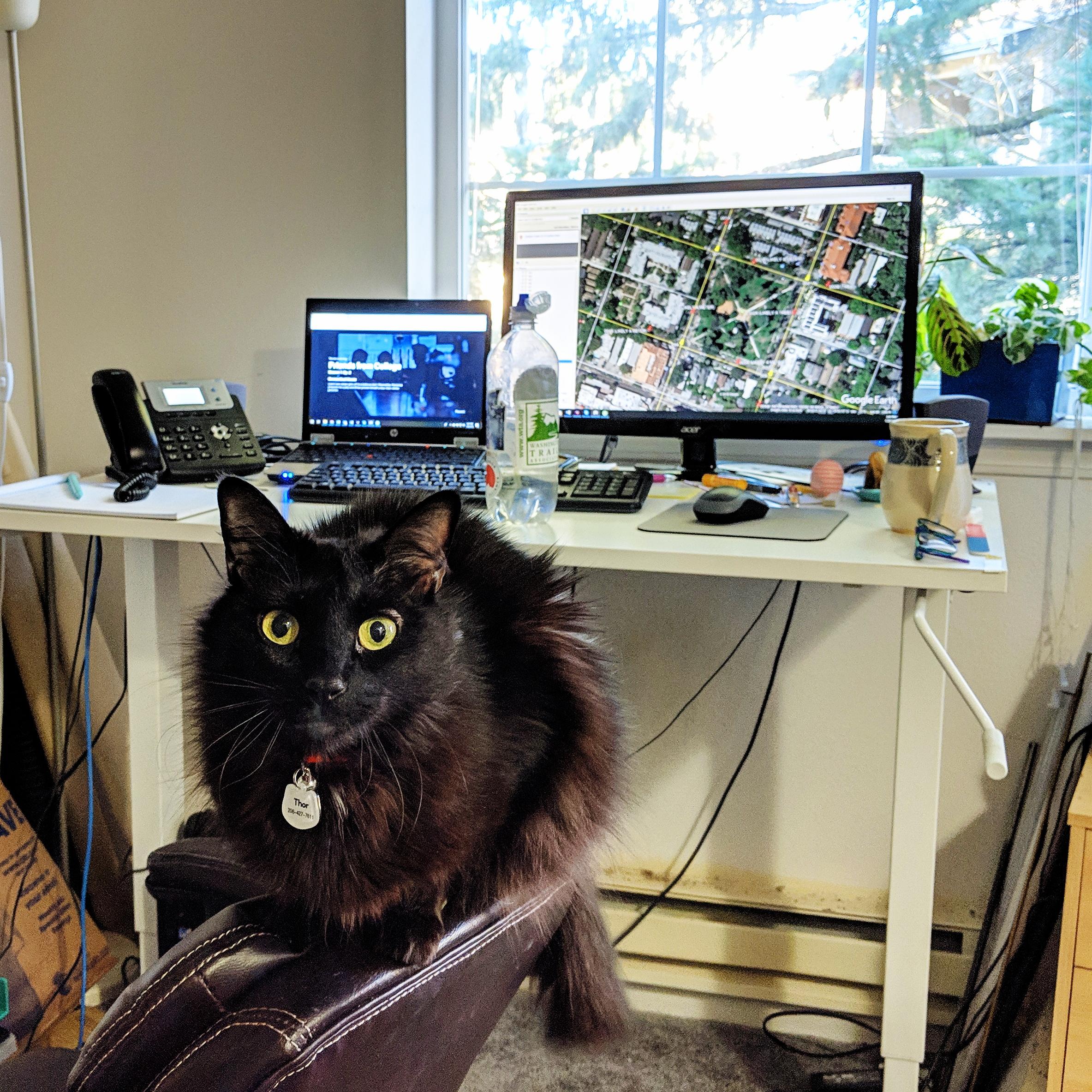 vs weekday kitty supervising my work