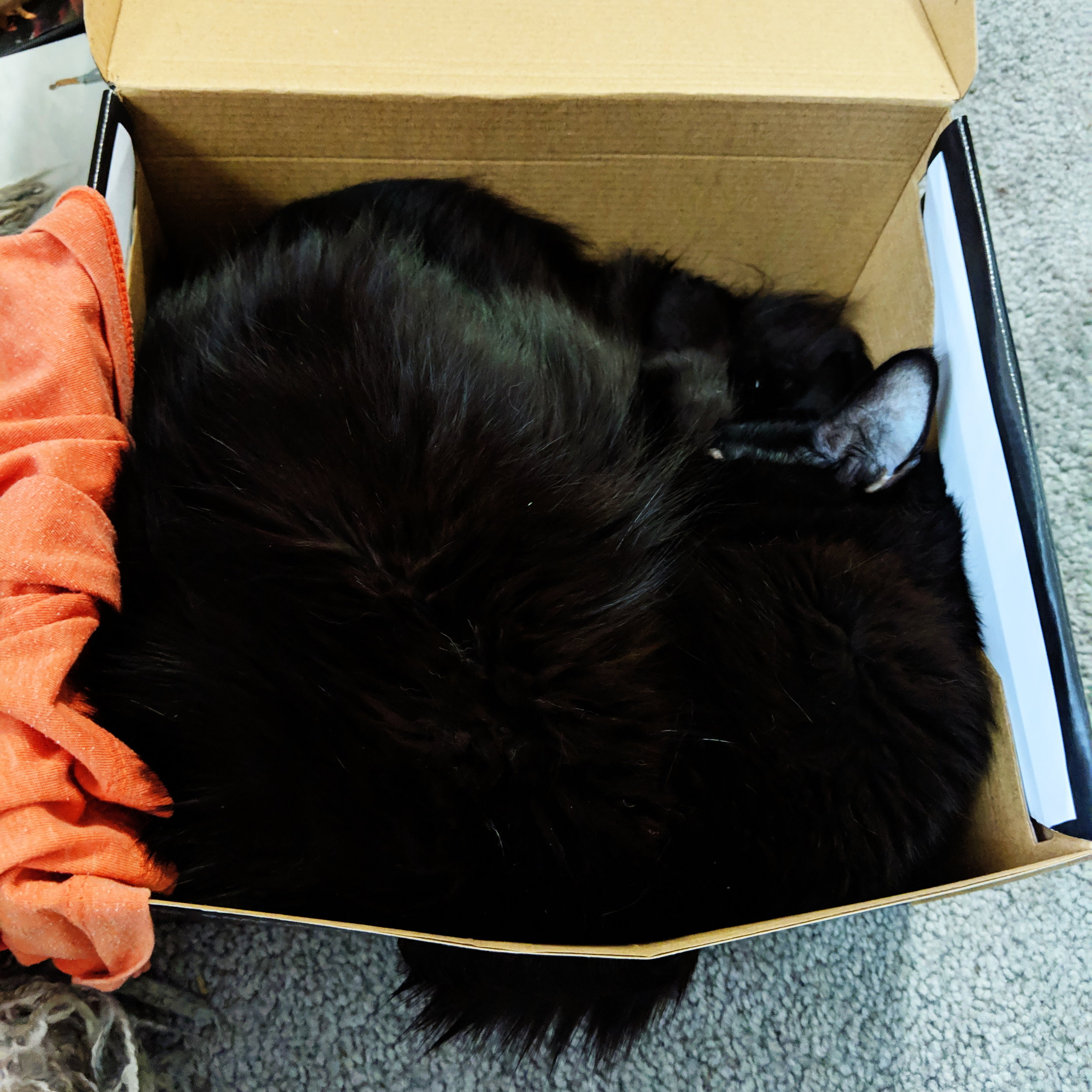 Working from home, my feline supervisor often naps on the job
