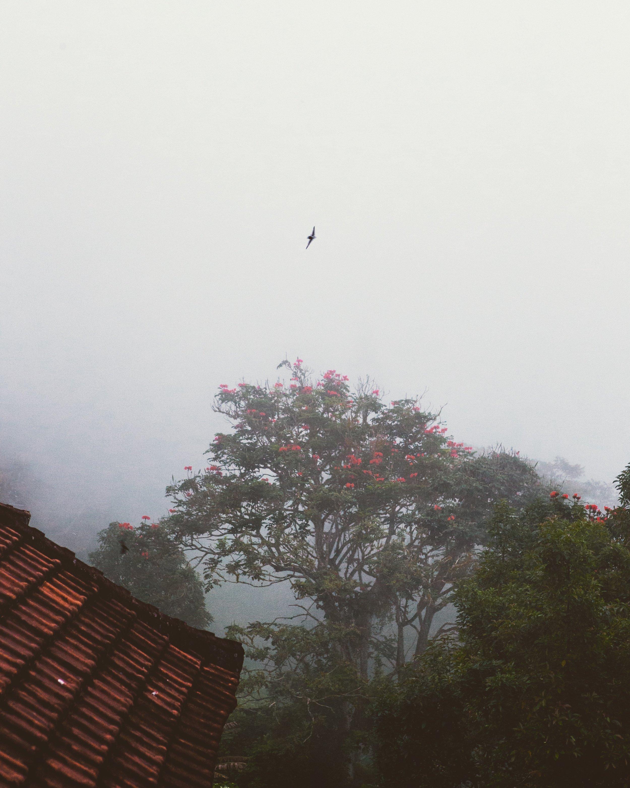 Bali 2018 - 47.3.jpg