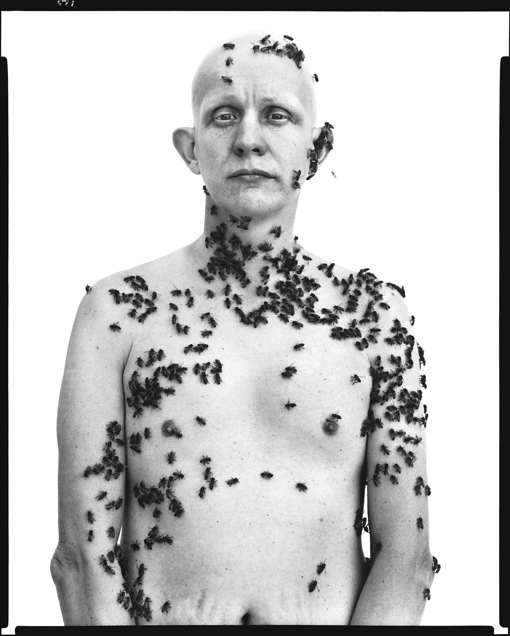 Ronald Fischer, beekeeper, Davis, California, May 9, 1981