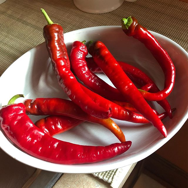 Our chili pepper harvest so far.Might try and make my own Sriracha.