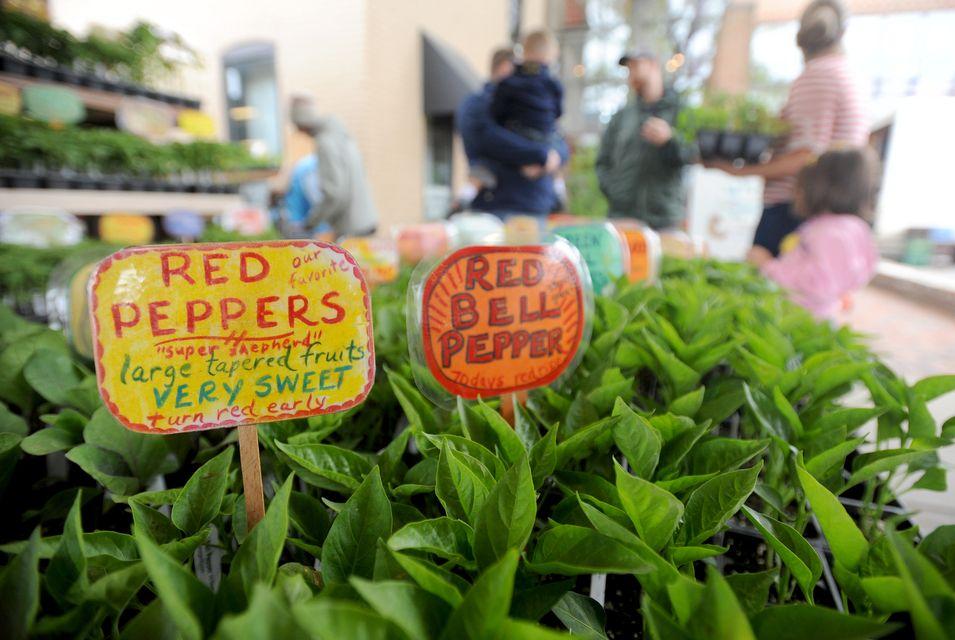 050212-AJC-wednesday-ann-arbor-farmers-market-01_fullsize.JPG
