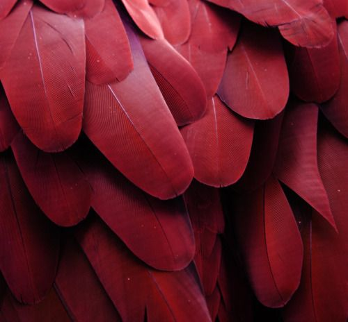 red feathers.jpg