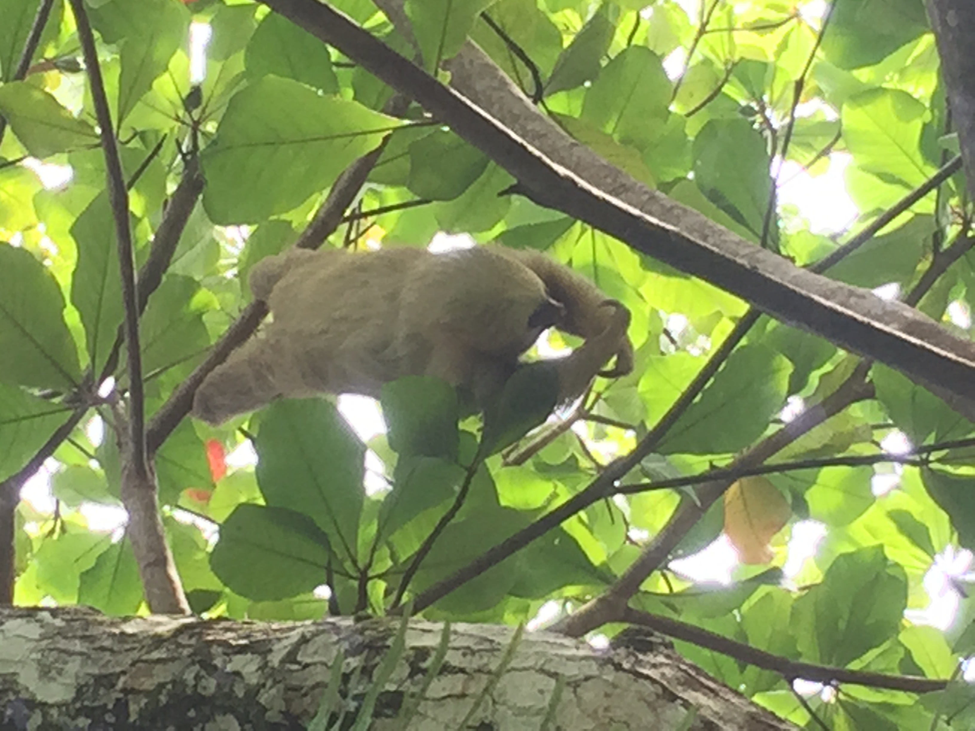 Sloth at our hotel