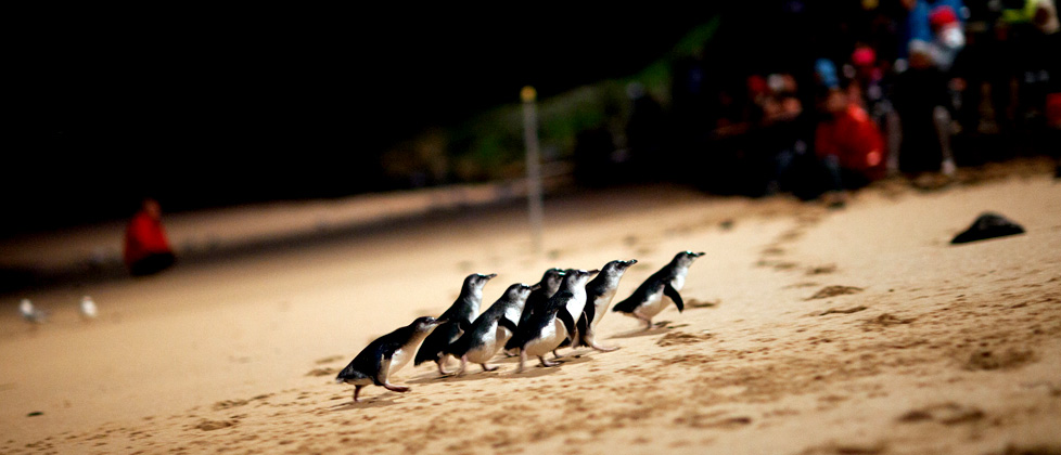 These are the Penguins we saw!
