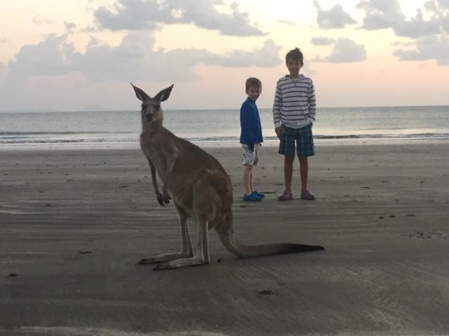 A Kangaroo at Cape Hillsborough.
