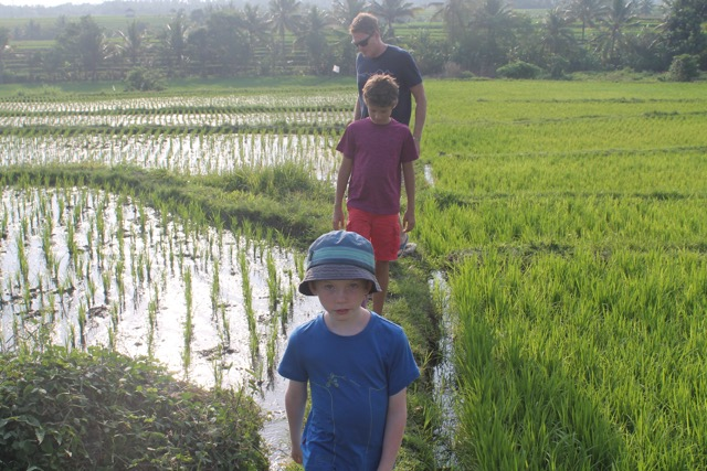 Our first rice terrace.