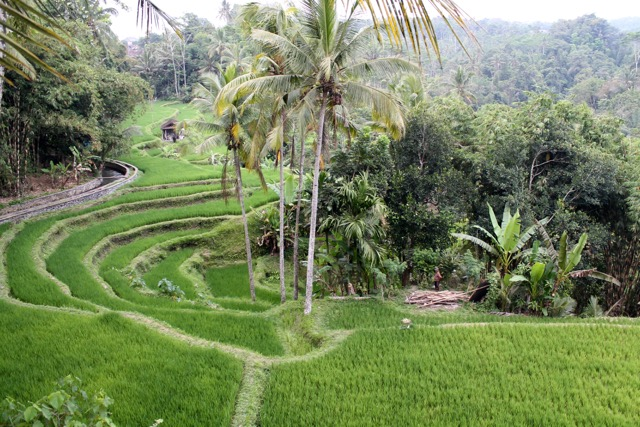 Tegalalang Ceking rice terrace Ubud