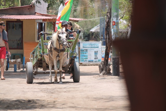 horse avec buggy.